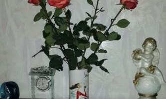 Фото і опис троянд