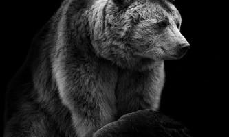 Фотограф-анімаліст wolf ademeit