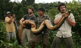 Кайман став жертвою зеленої анаконди