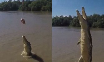 Фотограф зафіксував політ крокодила