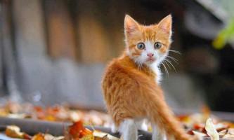Фотографії з кошенятами і цуценятами підвищують концентрацію уваги