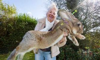 Фотографії найбільшого кролика в світі підірвали інтернет