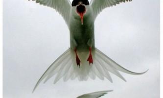 Фотоконкурс wwt-2010: `дика природа боліт`