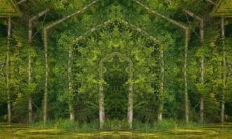 Фотоманипуляции з лісовими пейзажами від метта уолфорд (matt walford)
