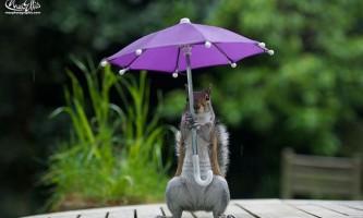 Фотосесія білки під дощем