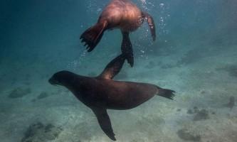 Галапагоські острови - райський куточок нашої планети