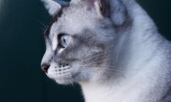 Гамавит: інструкція із застосування для кішок