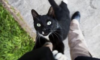 Гестренол для кішок: інструкція із застосування