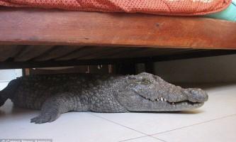Гігантська рептилія провела ніч під ліжком у який нічого не підозрював англійця