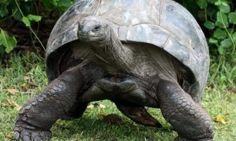 Гігантські черепахи - живі скам`янілості