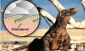 Гігантські ящірки-вбивці проживали за часів давніх австралійських аборигенів