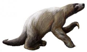 Гігантські лінивці - мегатерії