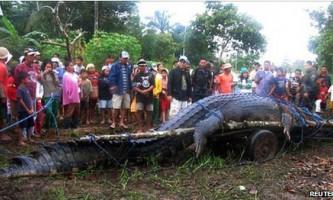 Гігантський морський крокодил лолонг помер на філіппінах