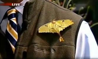 Гігантський метелик відклав яйця в вухо репортерові в прямому ефірі