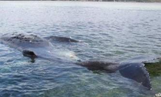 Гігантський синій кит перевернув човен з пасажирами