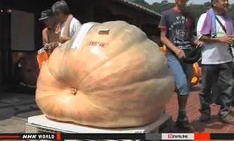 Гіганти-рекордсмени серед овочів і фруктів