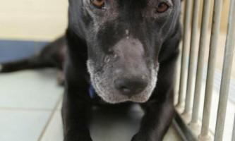 Гіннес - собака-вегетаріанець, з важкою формою алергії