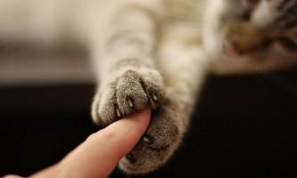Гладити кішок небезпечно для здоров`я