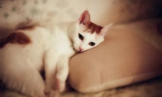 Глисти у кішок: симптоматика і лікування