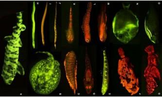 Глибоководні риби світяться, щоб не бути блакитними