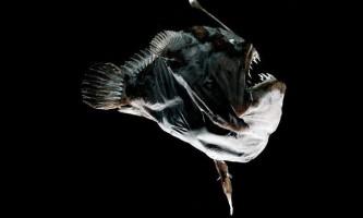 Глибоководні рибалки: риби з «приманкою»