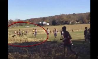 В сша олені атакували марафонців