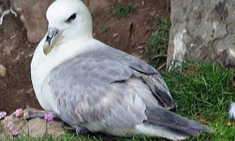Дурненький - дуже довірливий птах