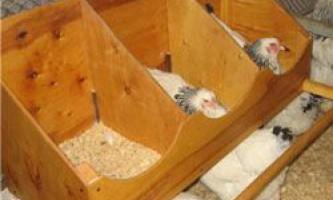 Гнізда для курей несучок: види, вимоги до розмірів, виготовлення своїми руками