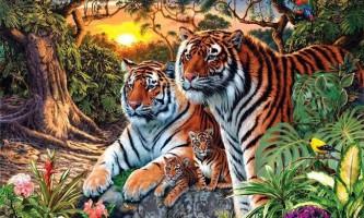Головоломка: знайди 16 тигрів