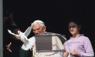 Голуб, випущений з рук папи римського, був атакований чайкою