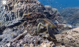 Google пропонує здійснити віртуальну підводне подорож