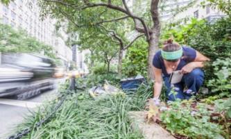 Міські мурахи виявилися ефективними переробниками харчових відходів