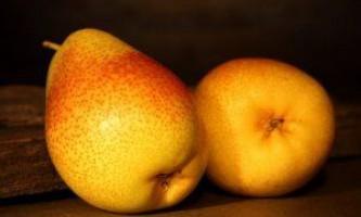 Готуємо грушу до зими: правильність осіннього догляду