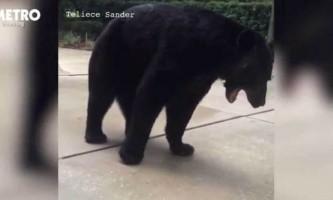 Говорила по телефону жінка не помітила ведмедя перед своїм носом