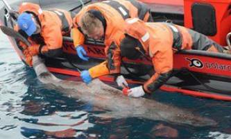 Гренландская акула - найбільша некваплива риба