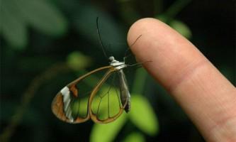 Грета від скляна метелик