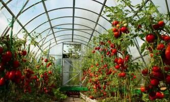 Грунт для томатів: який краще?