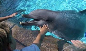 Група вчених представила проект декларації про права дельфінів.
