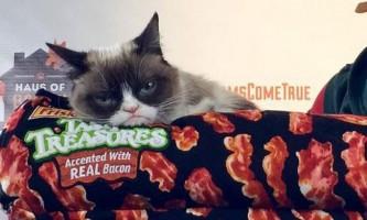 Сумна кішка про прізвисько тард відвідала світську вечірку в штаті техас