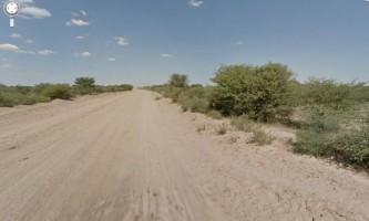 Гугломобіль звинуватили у вбивстві ботсванська осла