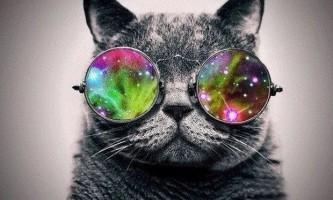 Характер британських кішок