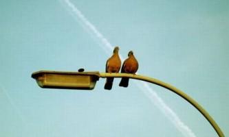 Хижим птахам довірили охорону шкільних обідів від голодних чайок