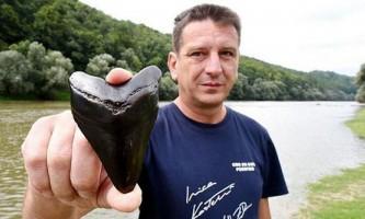 Хорват знайшов серед річкових черепашок зуб гігантської стародавньої акули