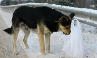 Господар залишив пса в будинку без їжі і води