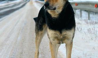 Вірний пес з російської глибинки