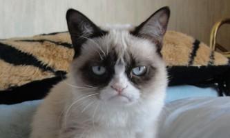 Господиня нервової кішки заробляє більше, ніж голлівудські зірки