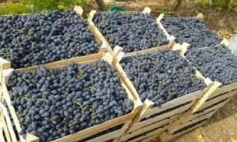Зберігання винограду