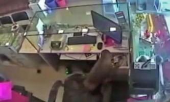 Хвостаті злодюжка пограбував ювелірний магазин у індії