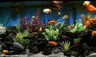 Ідеї оформлення акваріума для цихлид