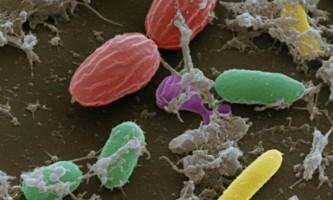 Ідентифікувати особу можна по мікробам на тілі людини
